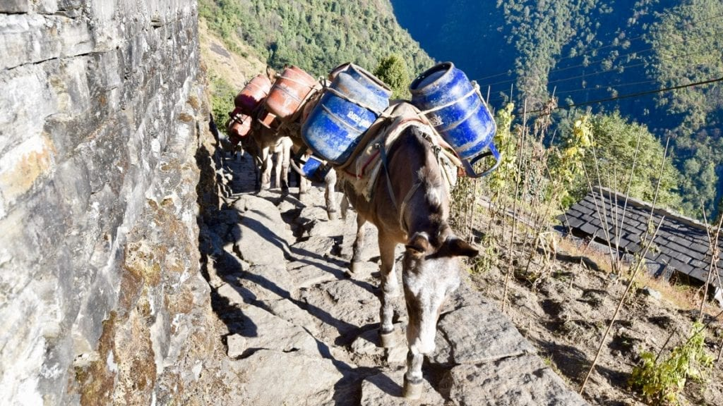 Horses are used for carrying goods.