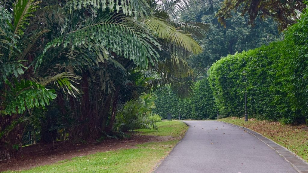 Road inside of Singapore Botanic Gardens
