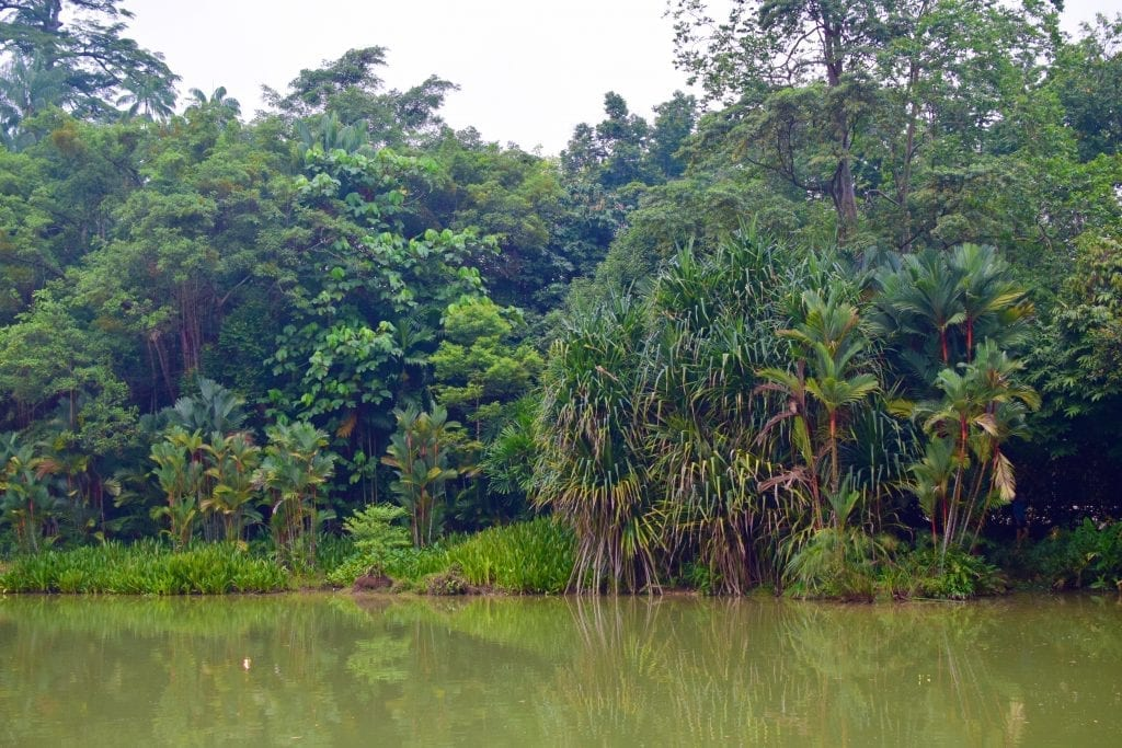 Pond in Singapore Botanic Gardens