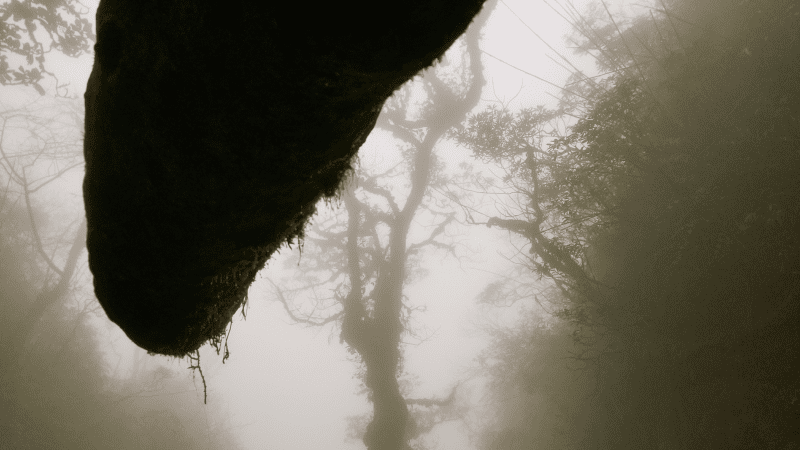 Enigmatic Surrounding On Way to Mount Fansipan