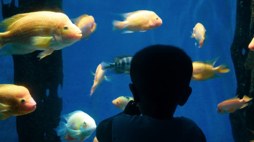 Children touching fish in underwater world Langkawi
