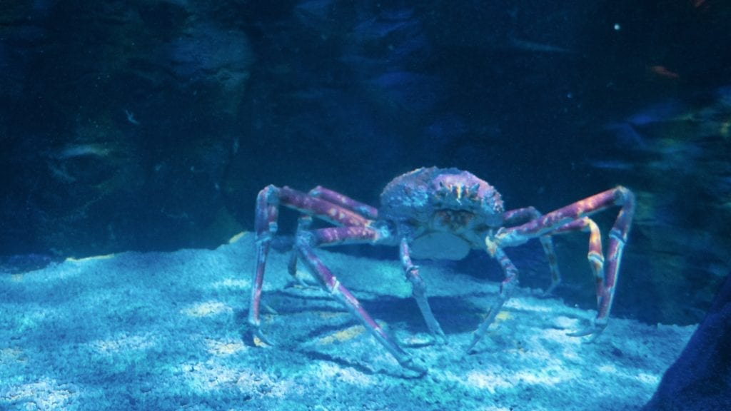 Crabs in Underwater World Langkawi